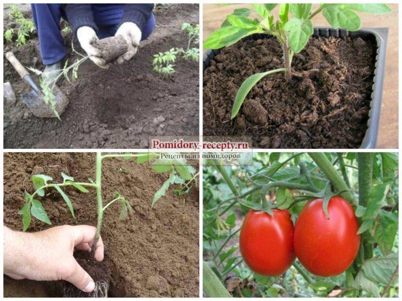 Сажать помидоры в 2017 559